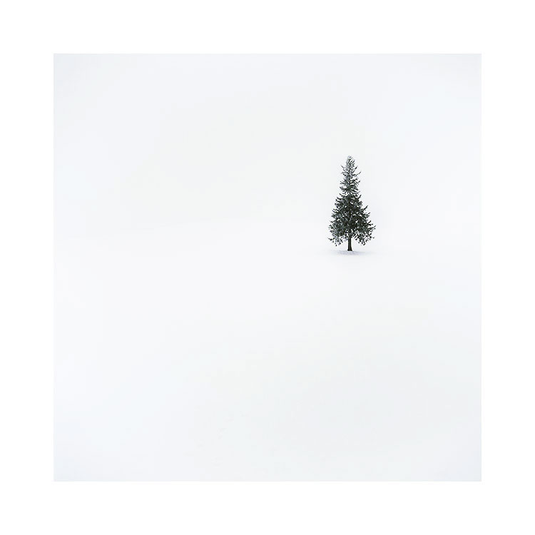 ( Distant ) Christmas tree, Biei, Hokkaido, January 2017 Image © Bruce Percy 2017