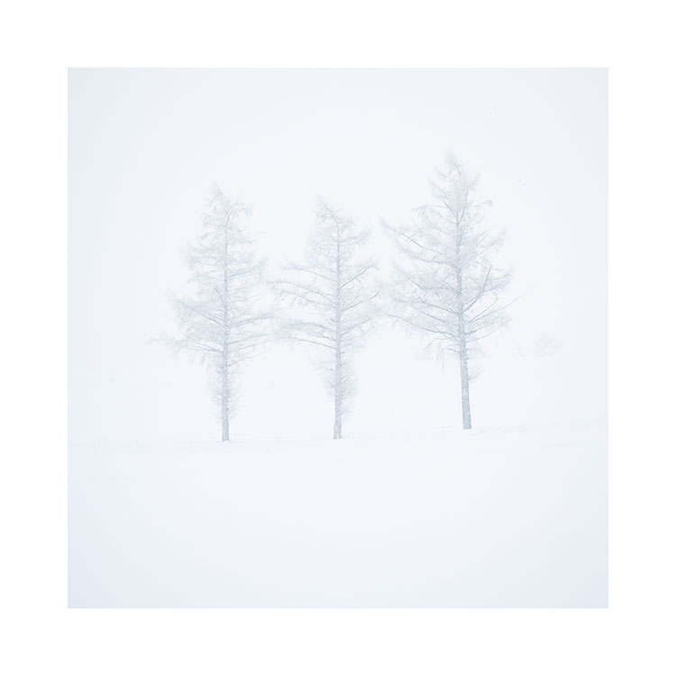 Trees in a snow storm, Hokkaido, January 2017 Image © Bruce Percy 2017