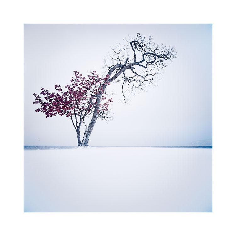Painted Maple Tree, Hokkaido. © 2018 Bruce Percy
