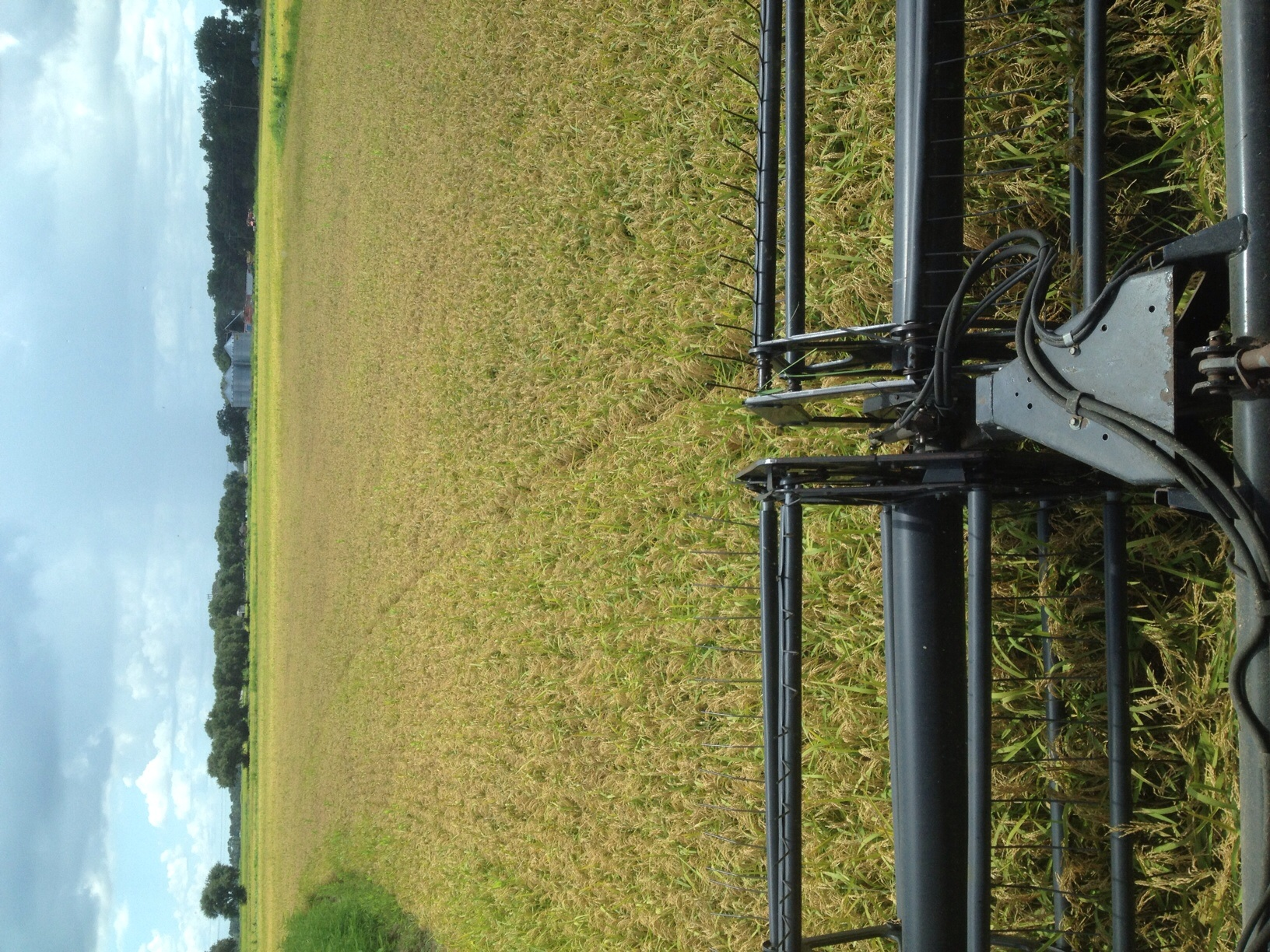 The view from the combine.