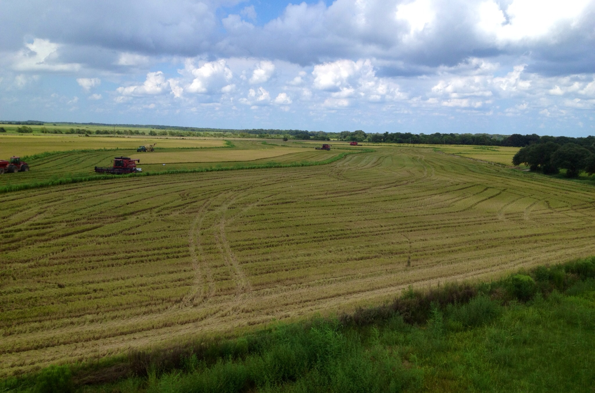 The view from the top of the bins over lookin the fields.