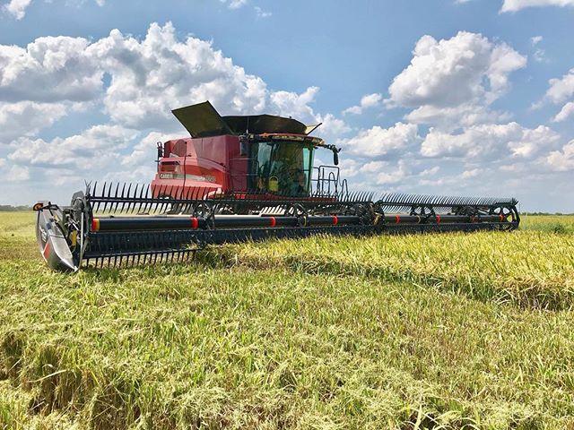 #rice #ricefarming #ricefarm #louisianarice #louisianariceproducer #louisianariceharvest #harvest #combine #blueskys