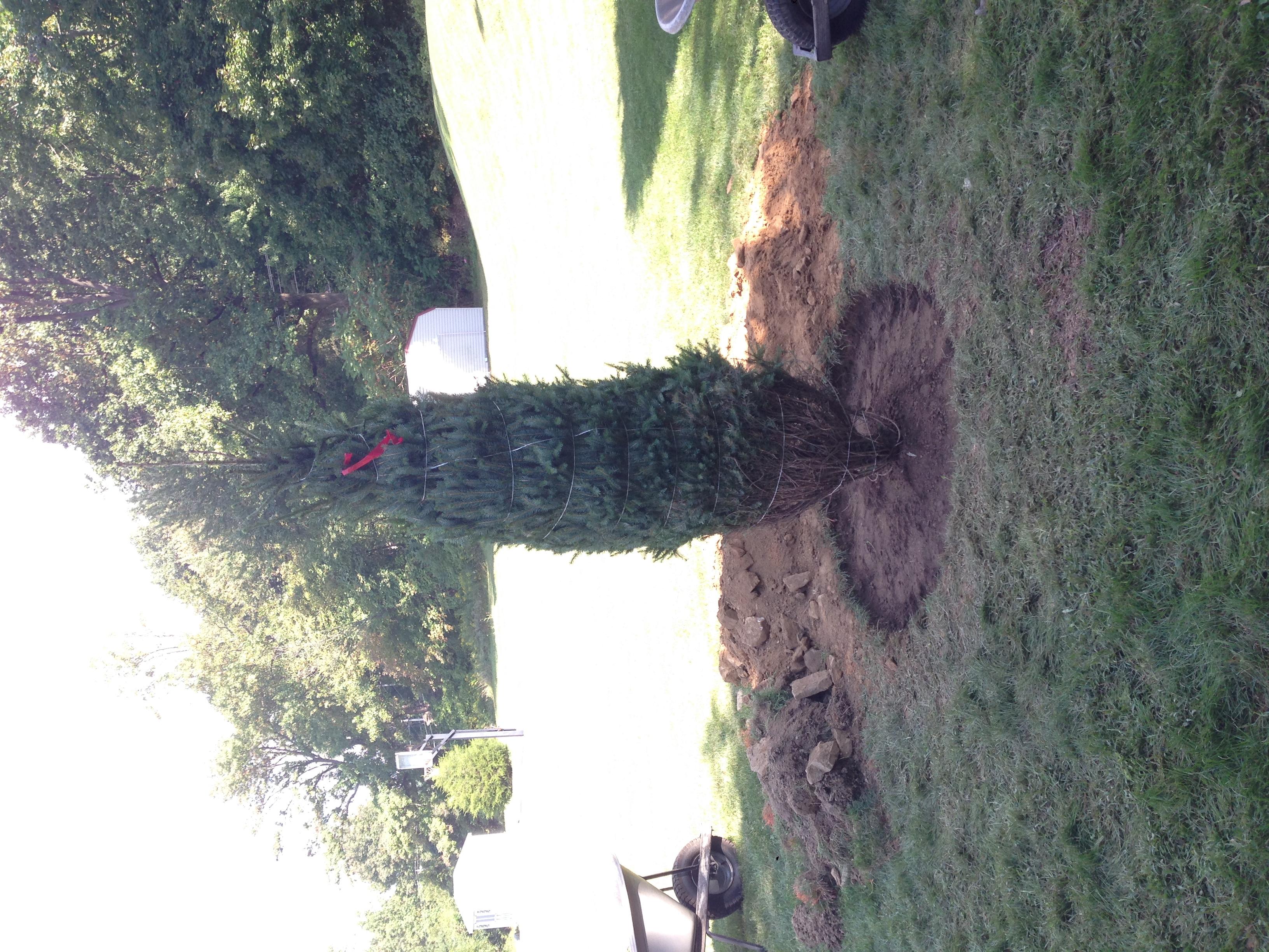 bray planting 1.JPG