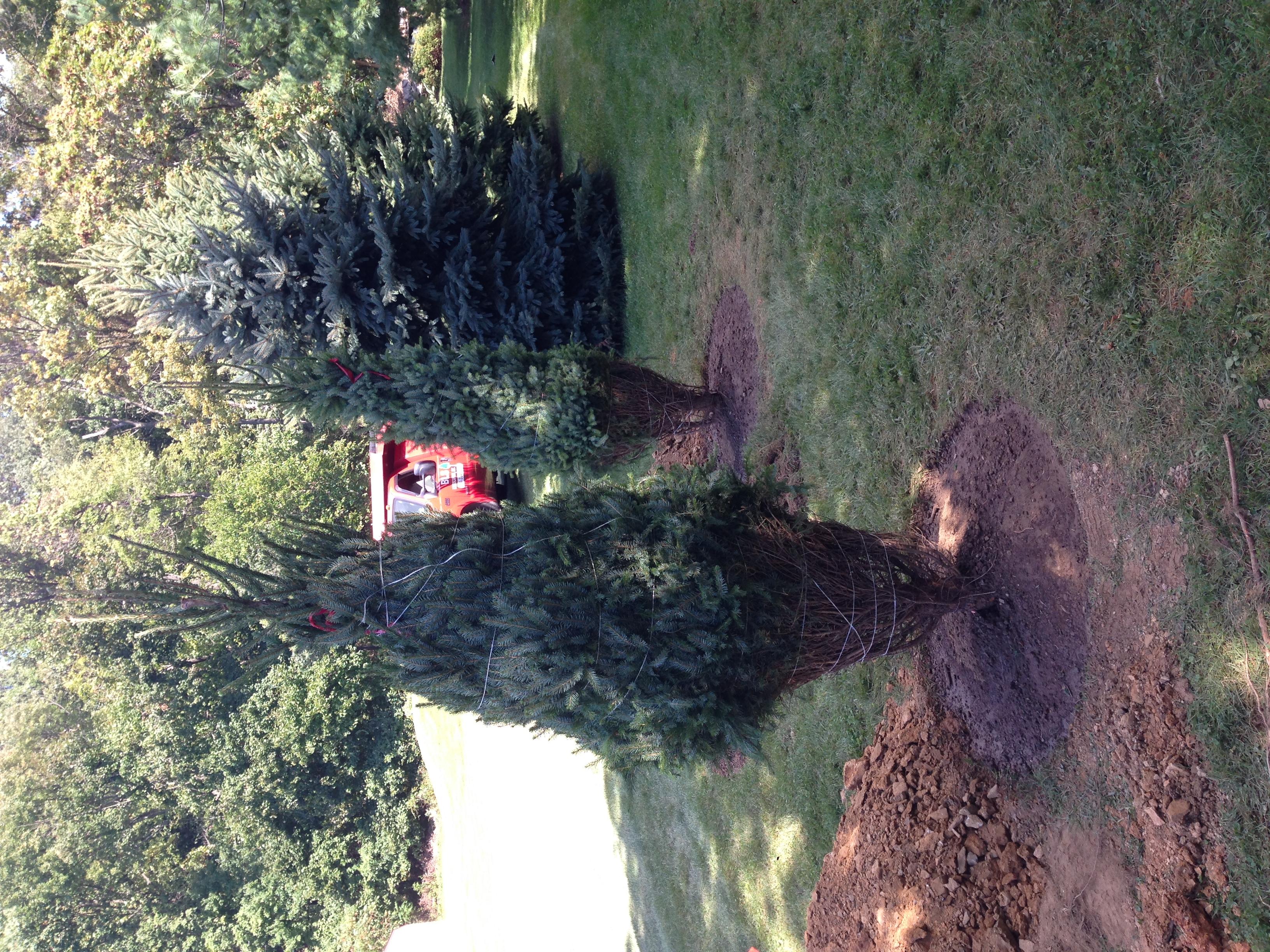 bray planting 2.JPG
