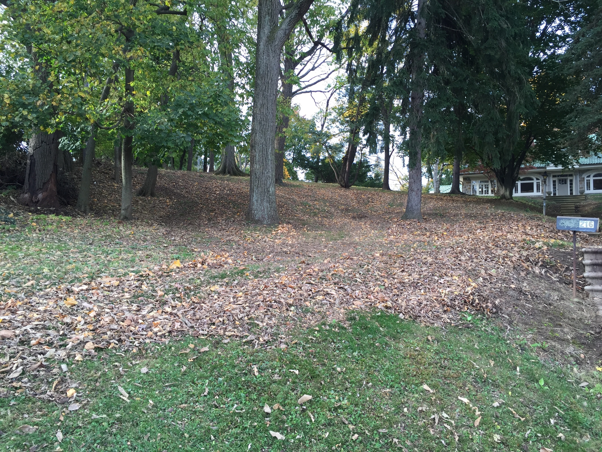 leaves on hill.jpg