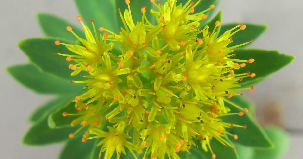 cropped-flower-for-website-e1471627777267.jpg