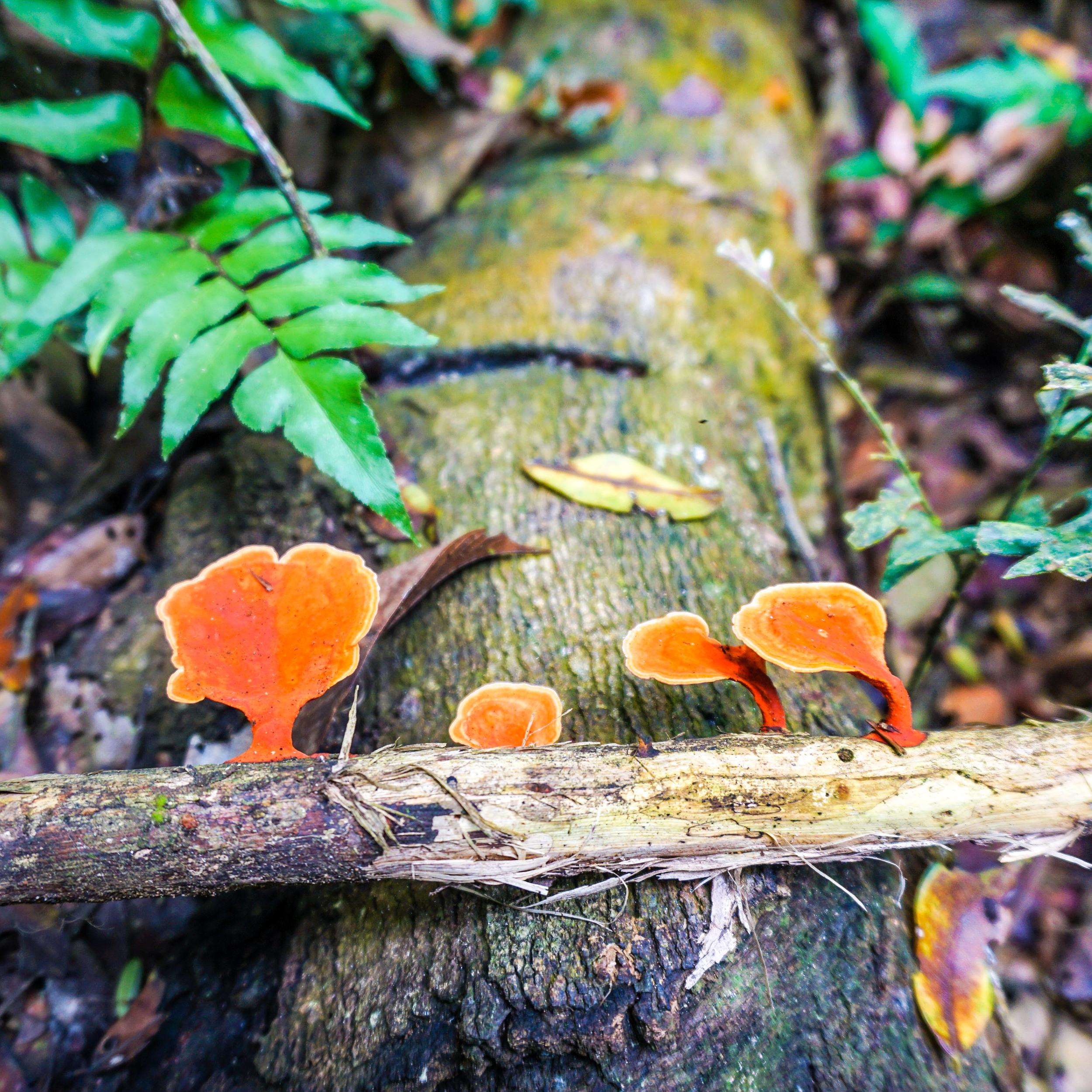 red fungus.jpg