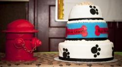 Bow Wow Bingo Cake, Louie's Legacy, Pet Photography, Staten Island, NY