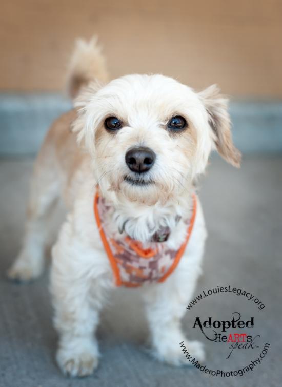 New York Pet Photorapher, Louie's Legacy
