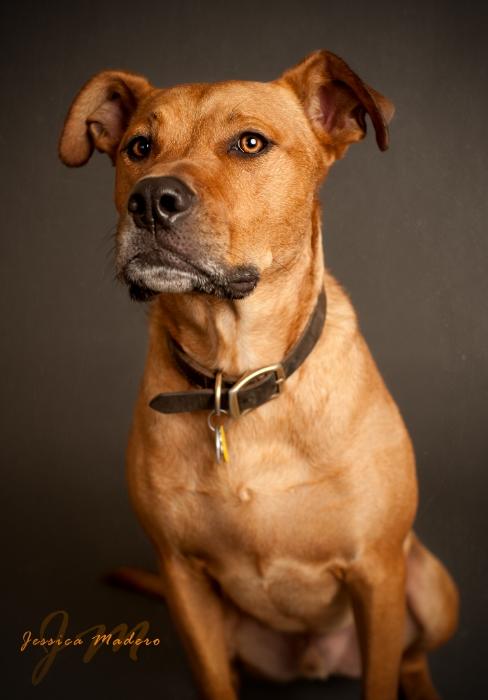 Staten Island Family Photographer, Jameson, New York Pet Photograher