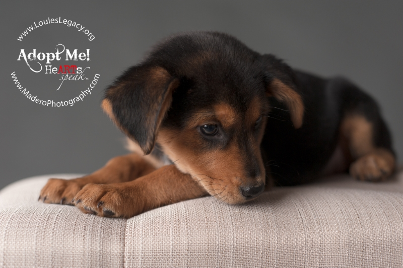 Staten Island Pet Photographer, New York Pet Photographer
