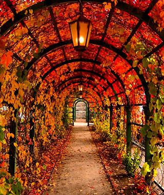 201410-ss-fall-foliage-estonia.jpg