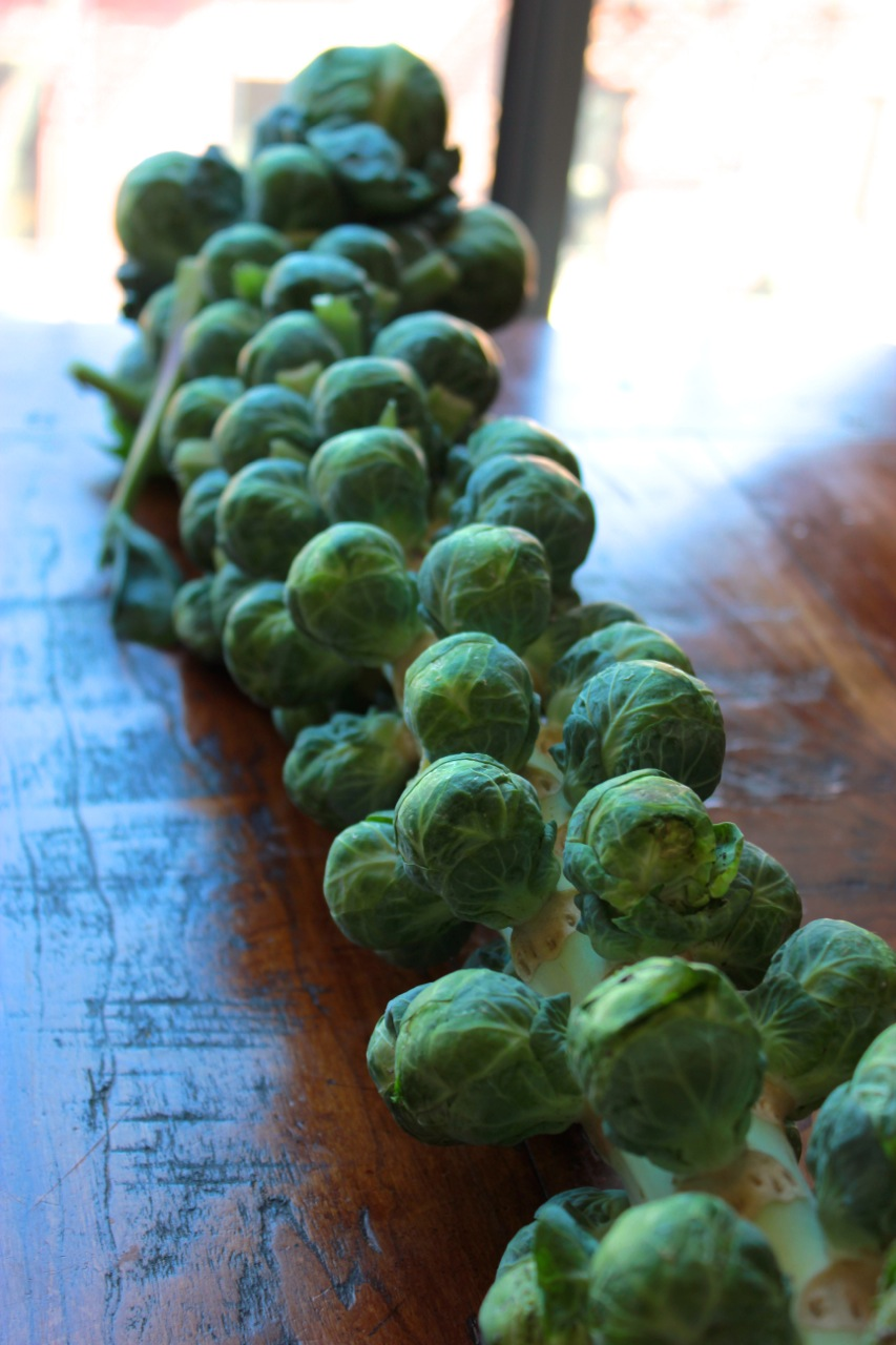 Classic Roasted Brussel Sprouts   Living Minnaly01.jpg