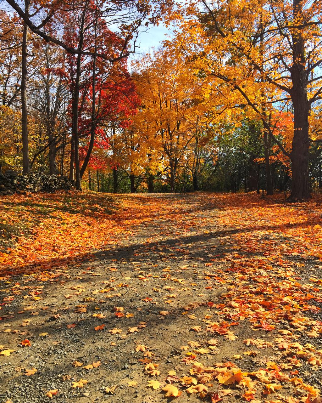 Upstate NY | Living Minnaly63.jpg