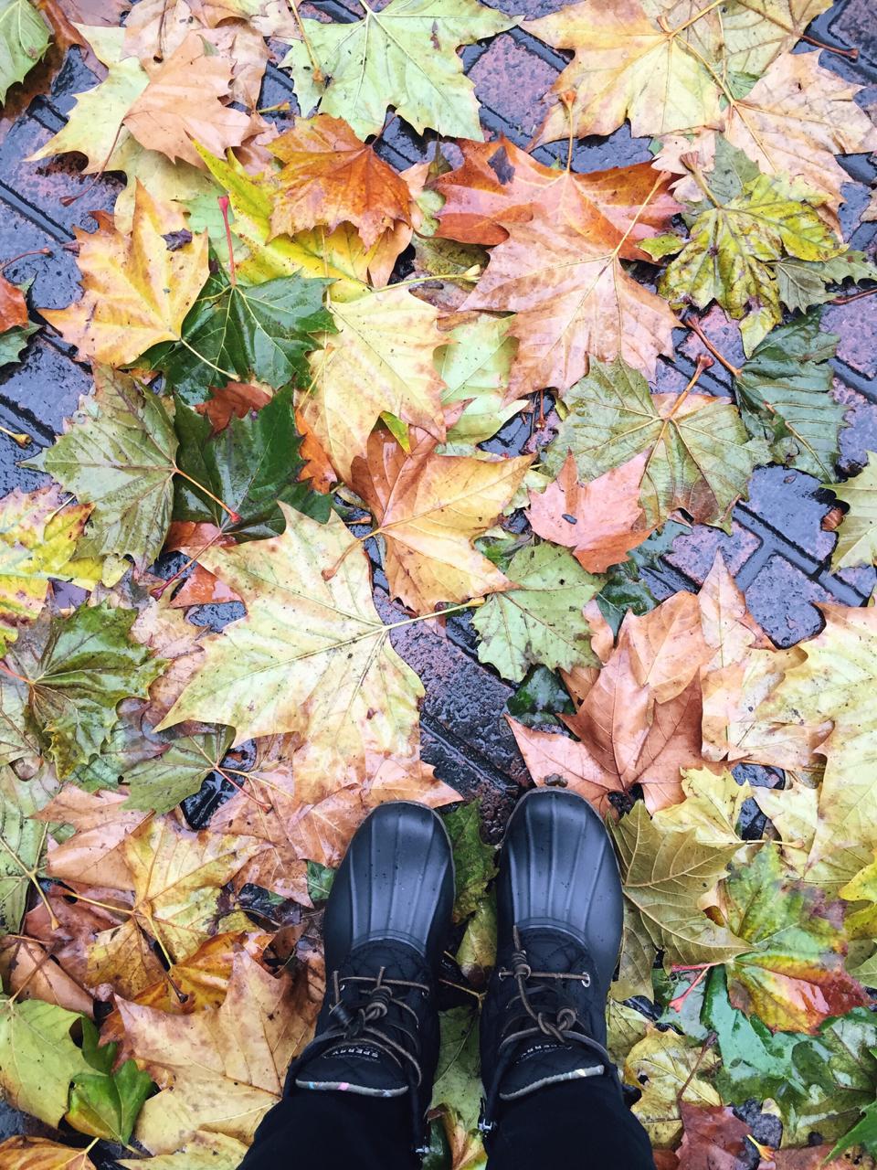 Leaves as big as my feet!