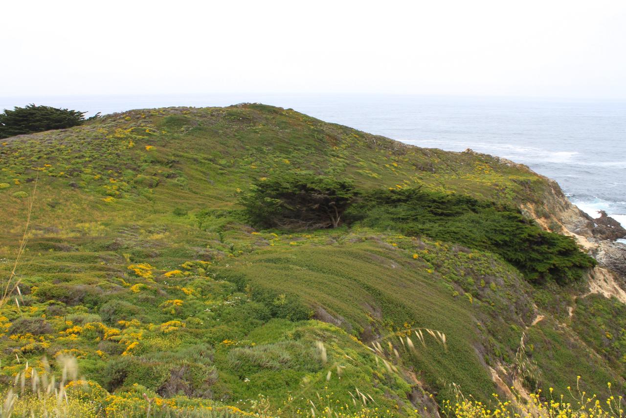 California Coast | Living Minnaly16.jpg