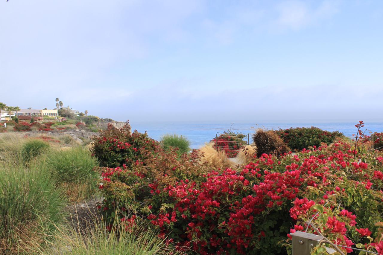 California Coast | Living Minnaly25.jpg