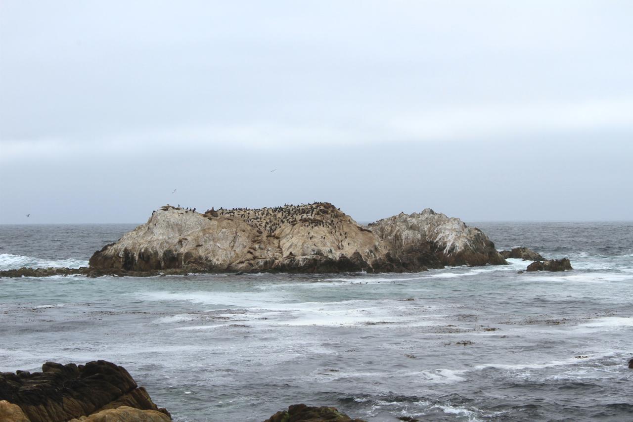 Carmel + Monterey Guide | Living Minnaly39.jpg