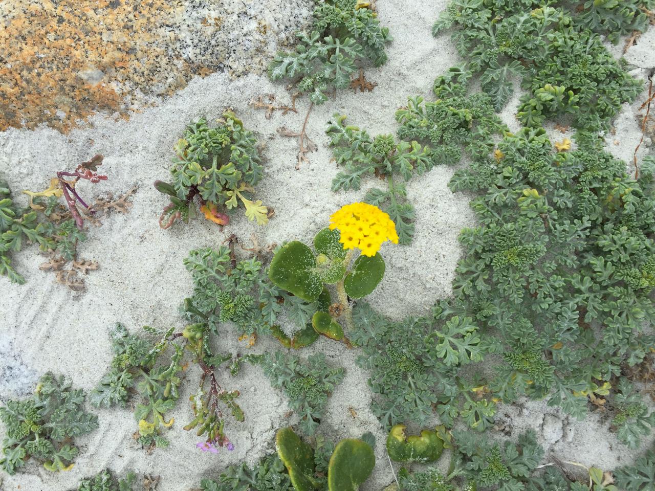 Carmel + Monterey Guide | Living Minnaly41.jpg