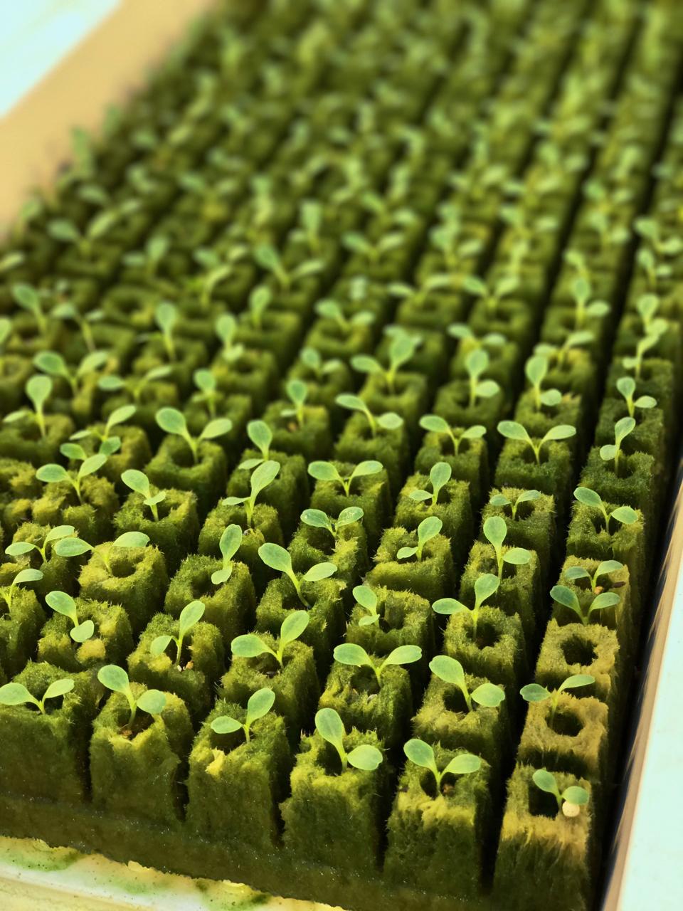 Why I Eat Local + Urban Farming with Gotham Greens | Living Minnaly - 9.jpg