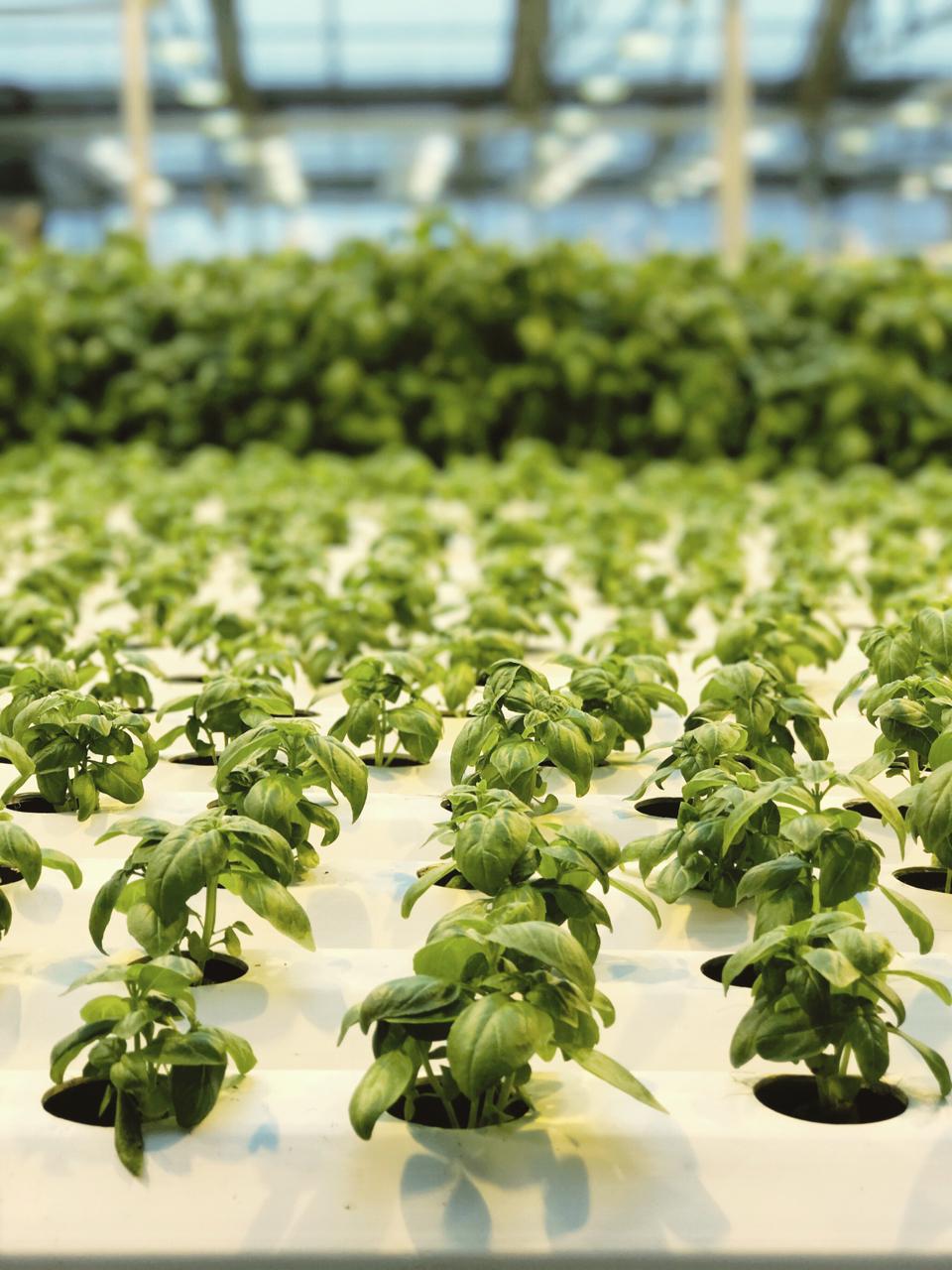 Why I Eat Local + Urban Farming with Gotham Greens | Living Minnaly - 12.jpg