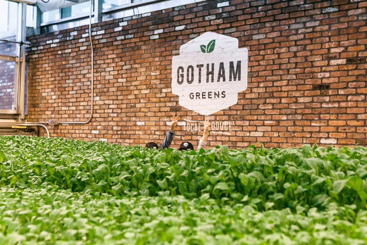 Why I Eat Local + Urban Farming with Gotham Greens | Living Minnaly - 18.jpg