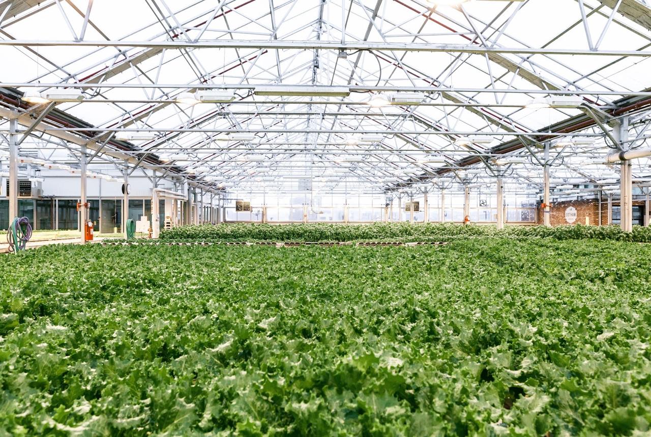 Why I Eat Local + Urban Farming with Gotham Greens | Living Minnaly - 24.jpg