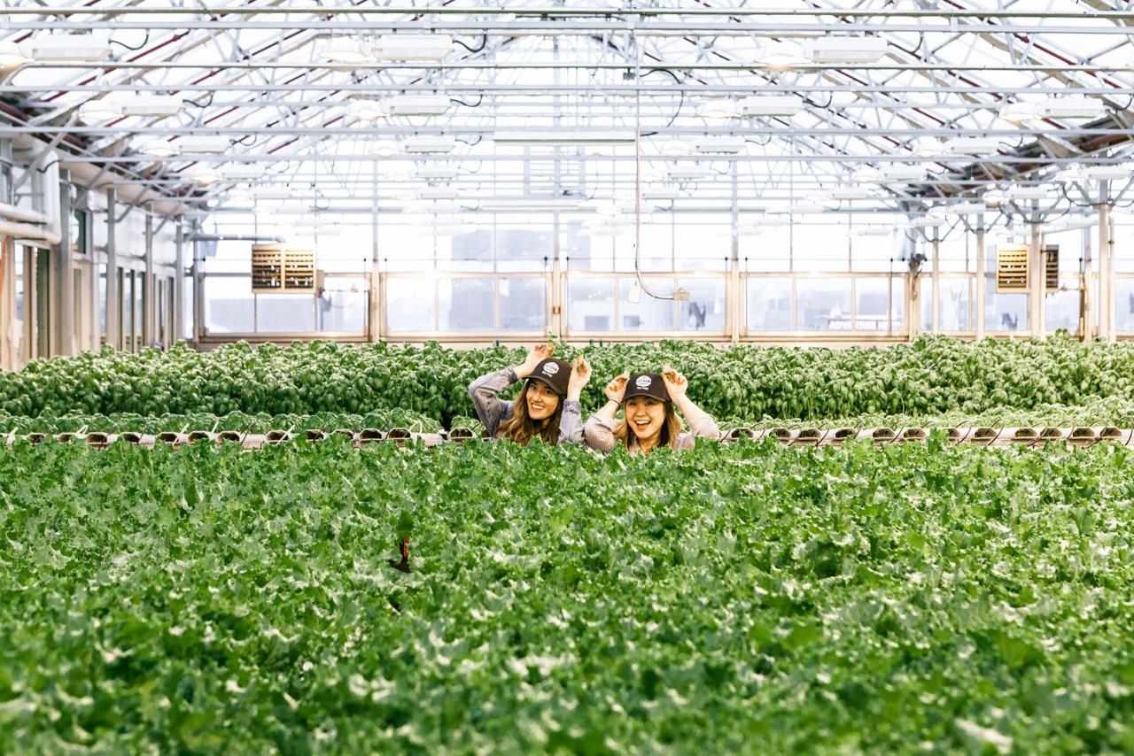 Why I Eat Local + Urban Farming with Gotham Greens | Living Minnaly - 26.jpg