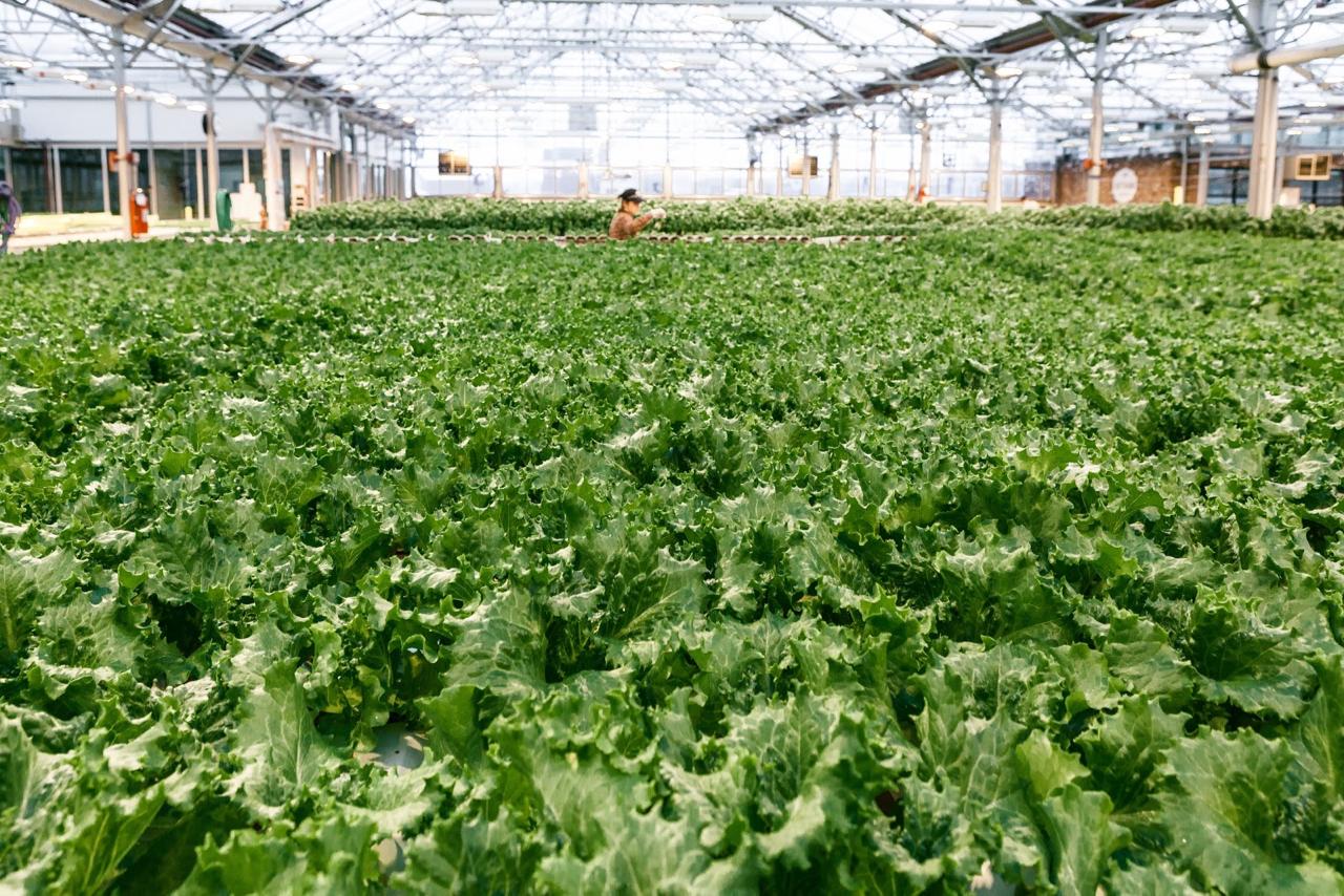 Why I Eat Local + Urban Farming with Gotham Greens | Living Minnaly - 23.jpg
