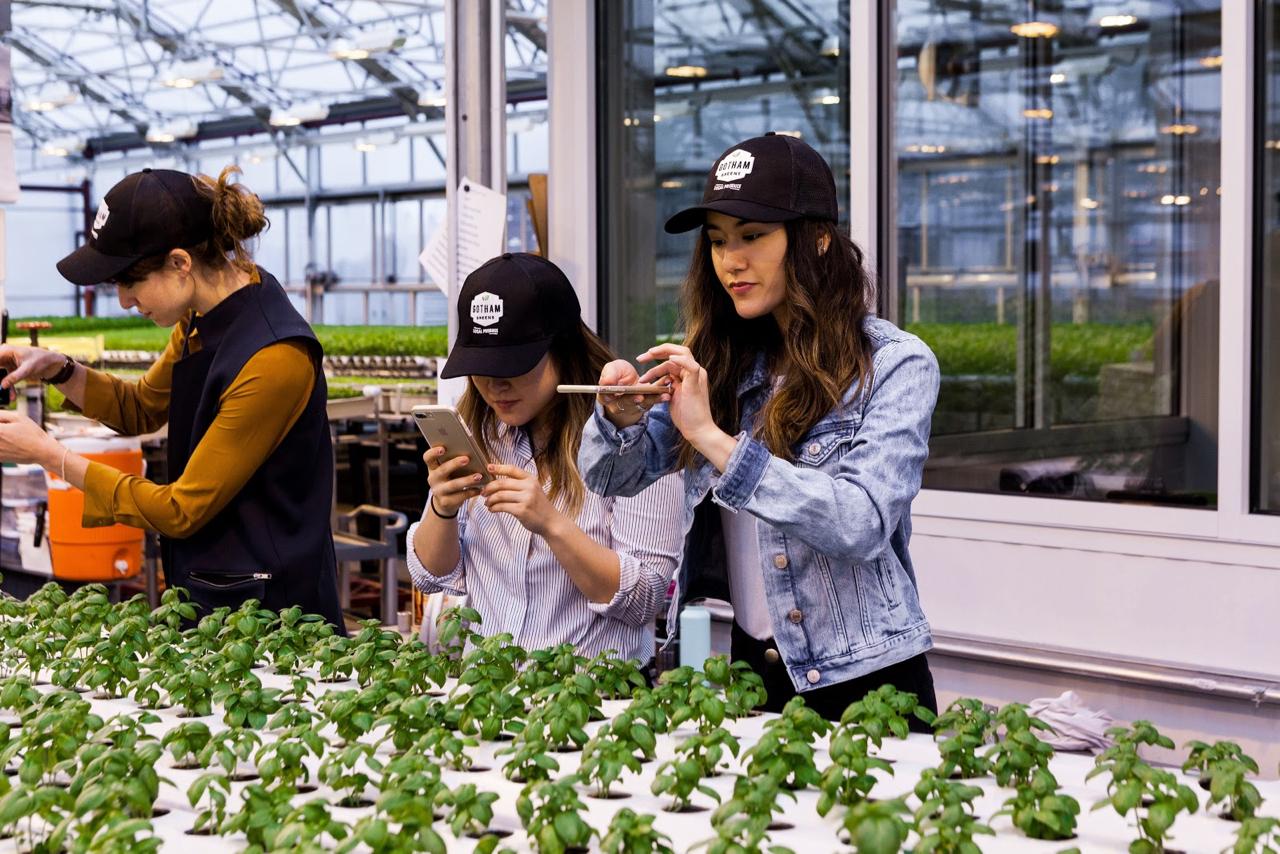 Why I Eat Local + Urban Farming with Gotham Greens | Living Minnaly - 20.jpg