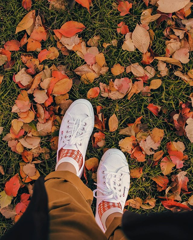 🍁today is the first day I smelled fall, so I'm on crunchy leaf watch now 👀🍂tell me your fave fall tings👇