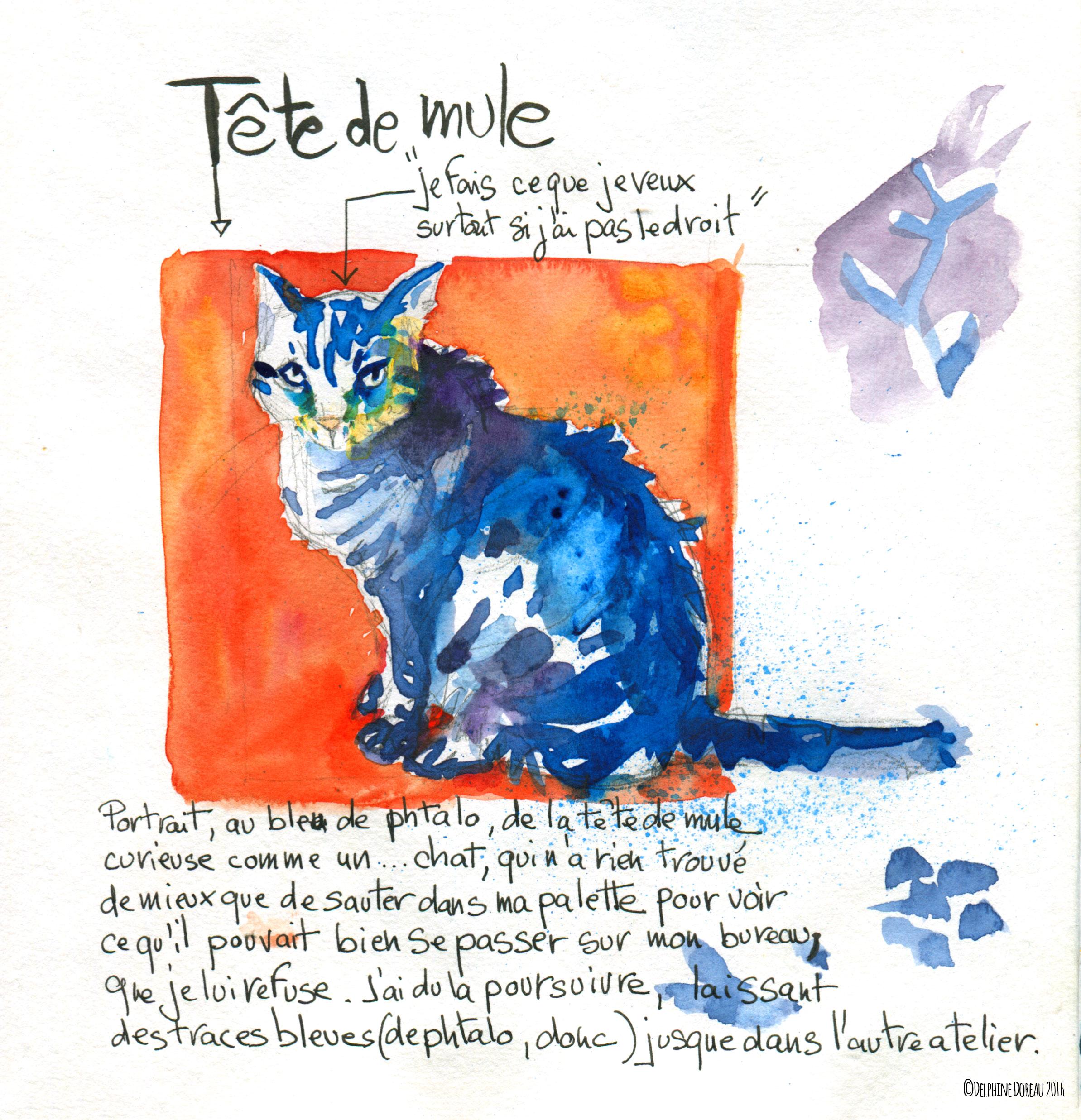 chat_bleu_seul.jpg