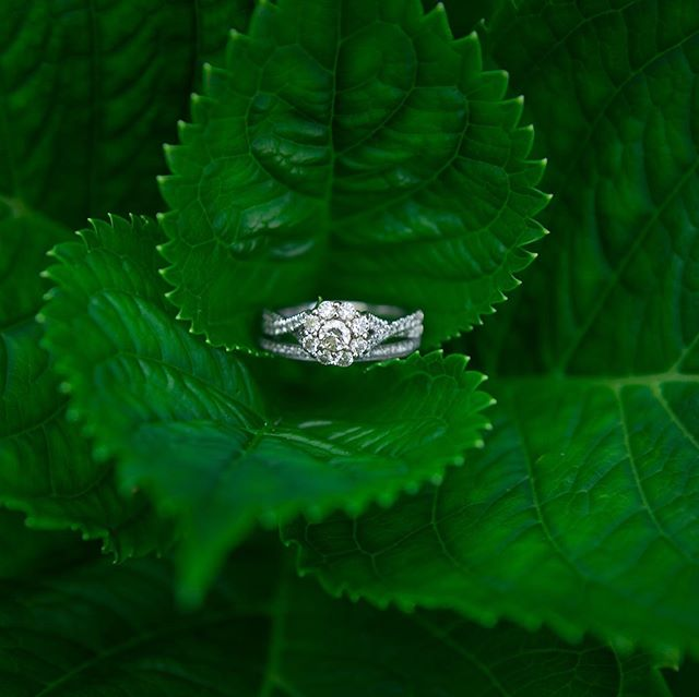 When nature and diamonds collide. . . . . . . . . . #ringphotography #diamond #detailphotography #engagamentring #diamondbands #southernwedding #countryweddings #weddingrings #ashleyvanleyphotography