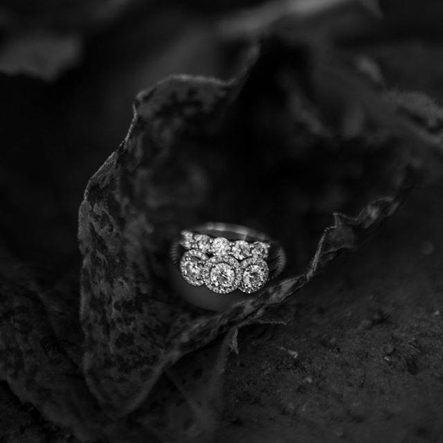Light shines bright in the dark. . . . . . . . . . . . . . . #weddingphotography #rings #diamonds #diamondring #weddingbands #diamondring #weddingdetailshots #details #lovequotes #light #blackandwhite #leaf #naturephotography #ashleyvanleyphotography