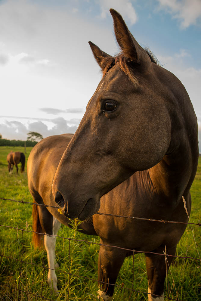 Horse Poses for a Portrait