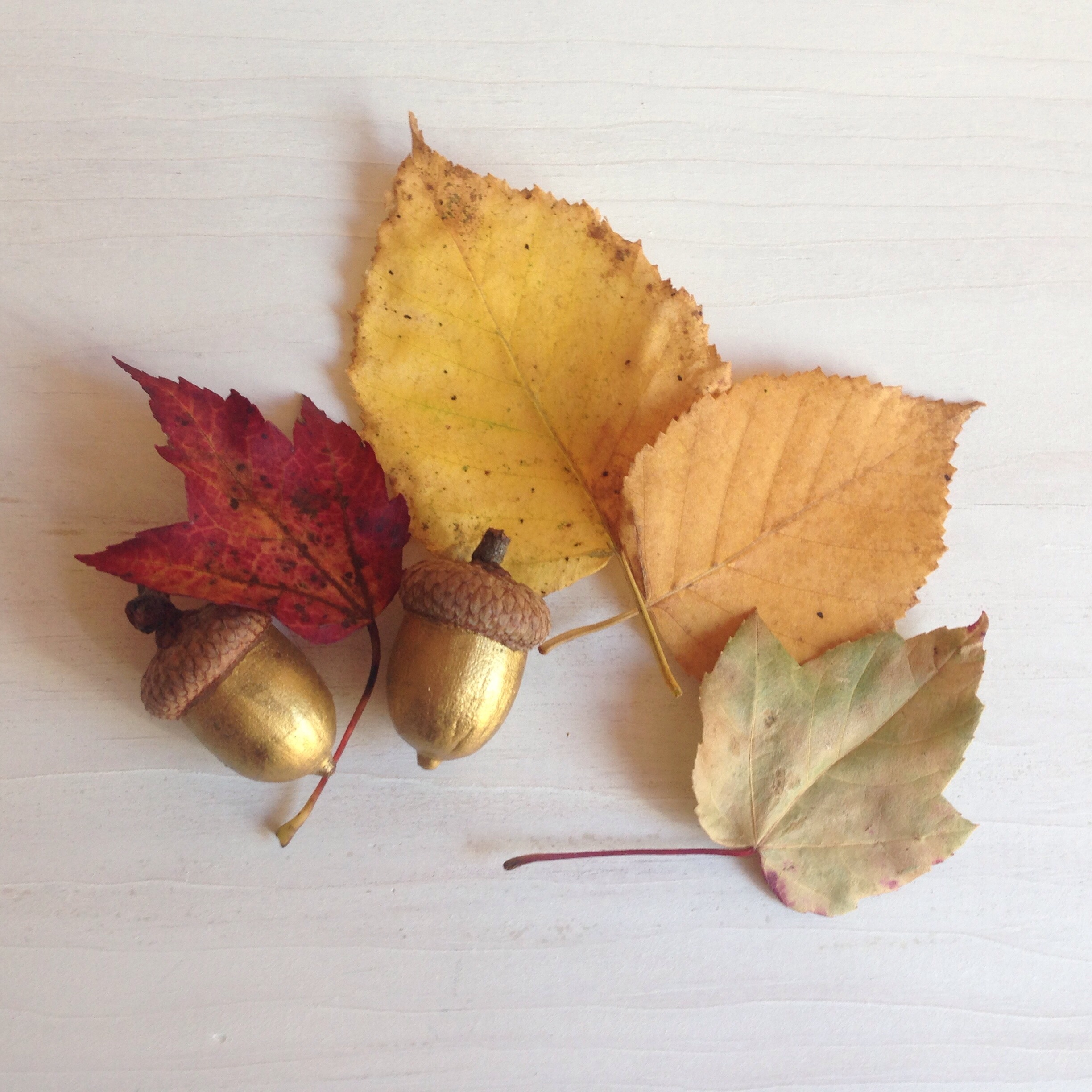 New England Fall details - gold acorns