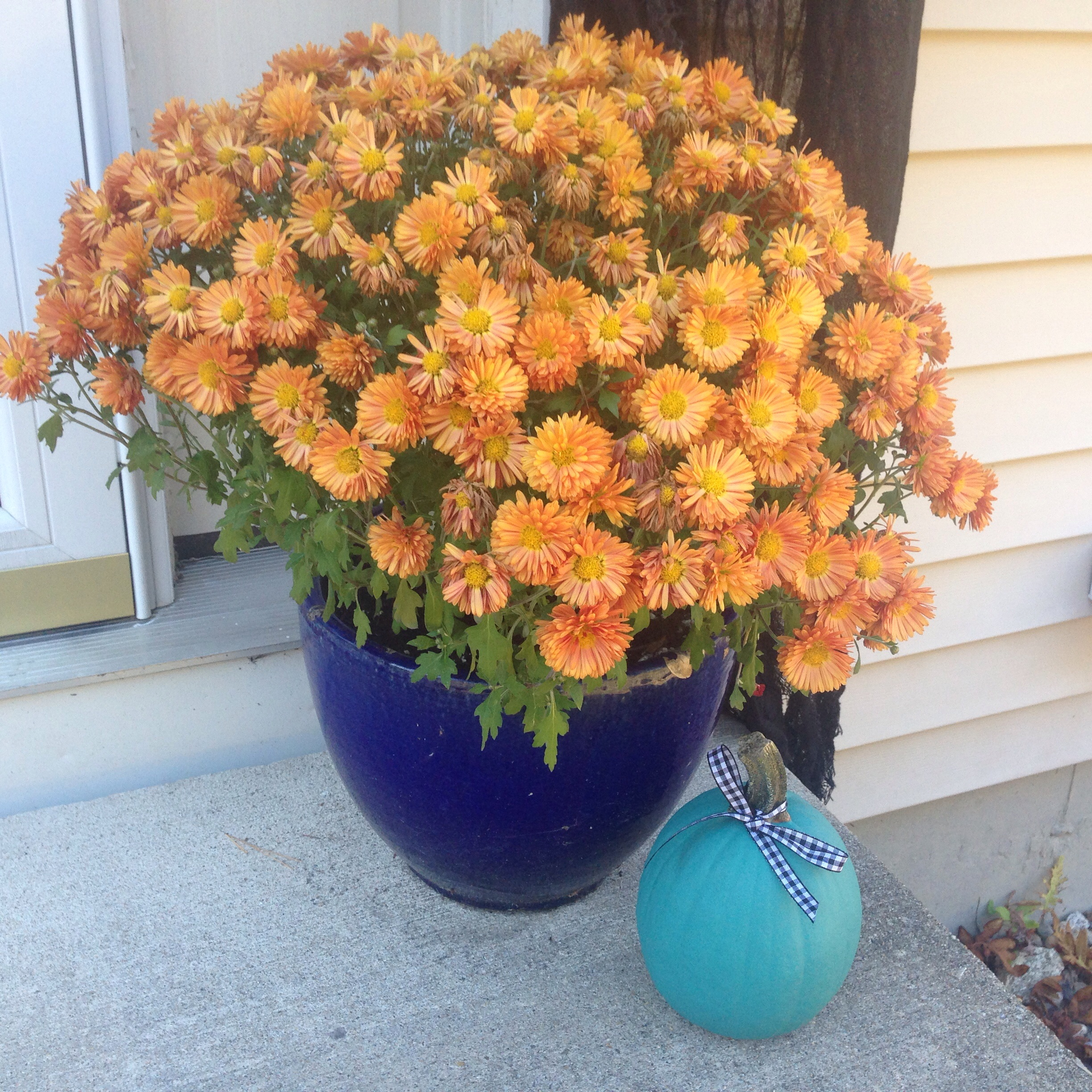 Teal Pumpkin Project - inclusion for all dietary restrictions
