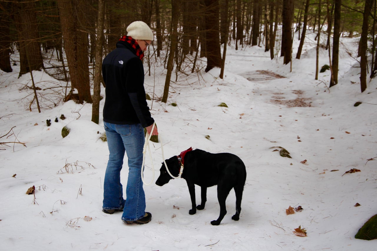 Walking dog in the woods in New England