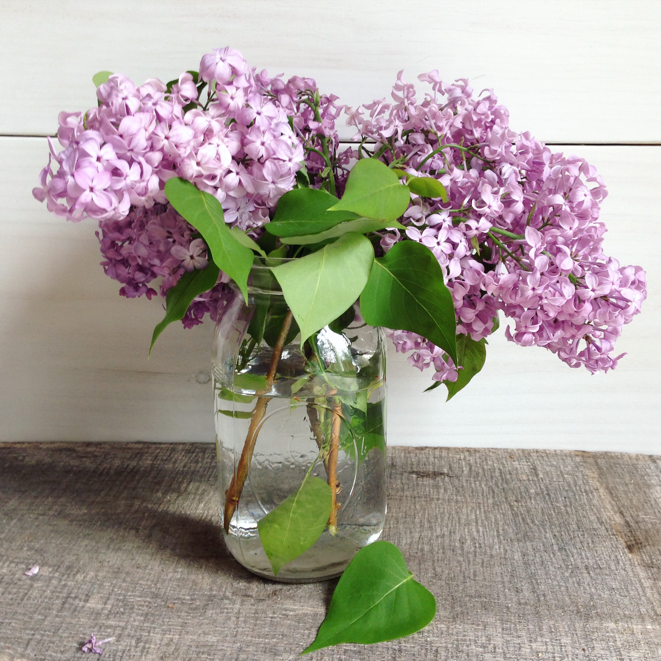 Love me some lilacs!  A perfect sign of spring.