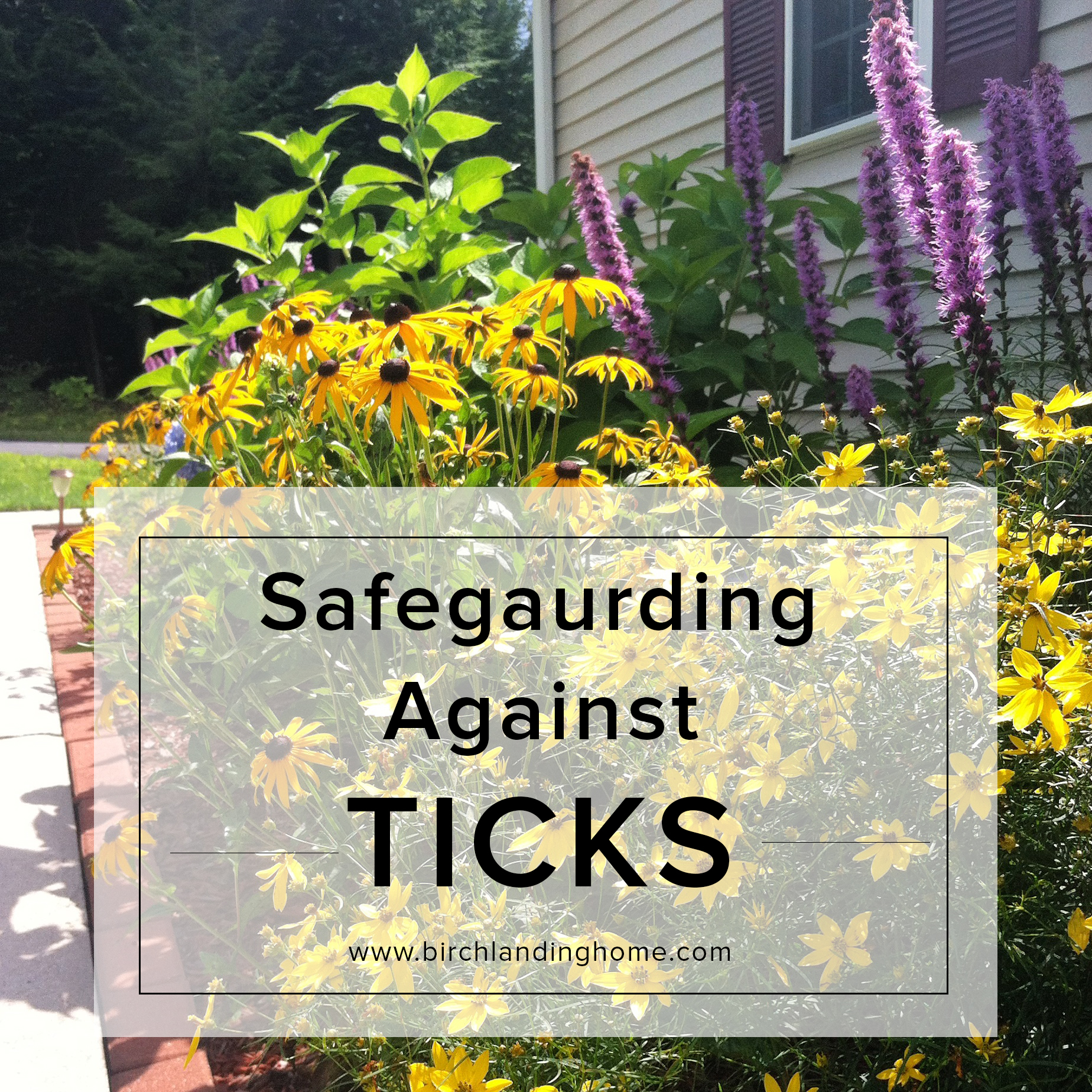 Safeguarding your yard, family, and pets against TICKS