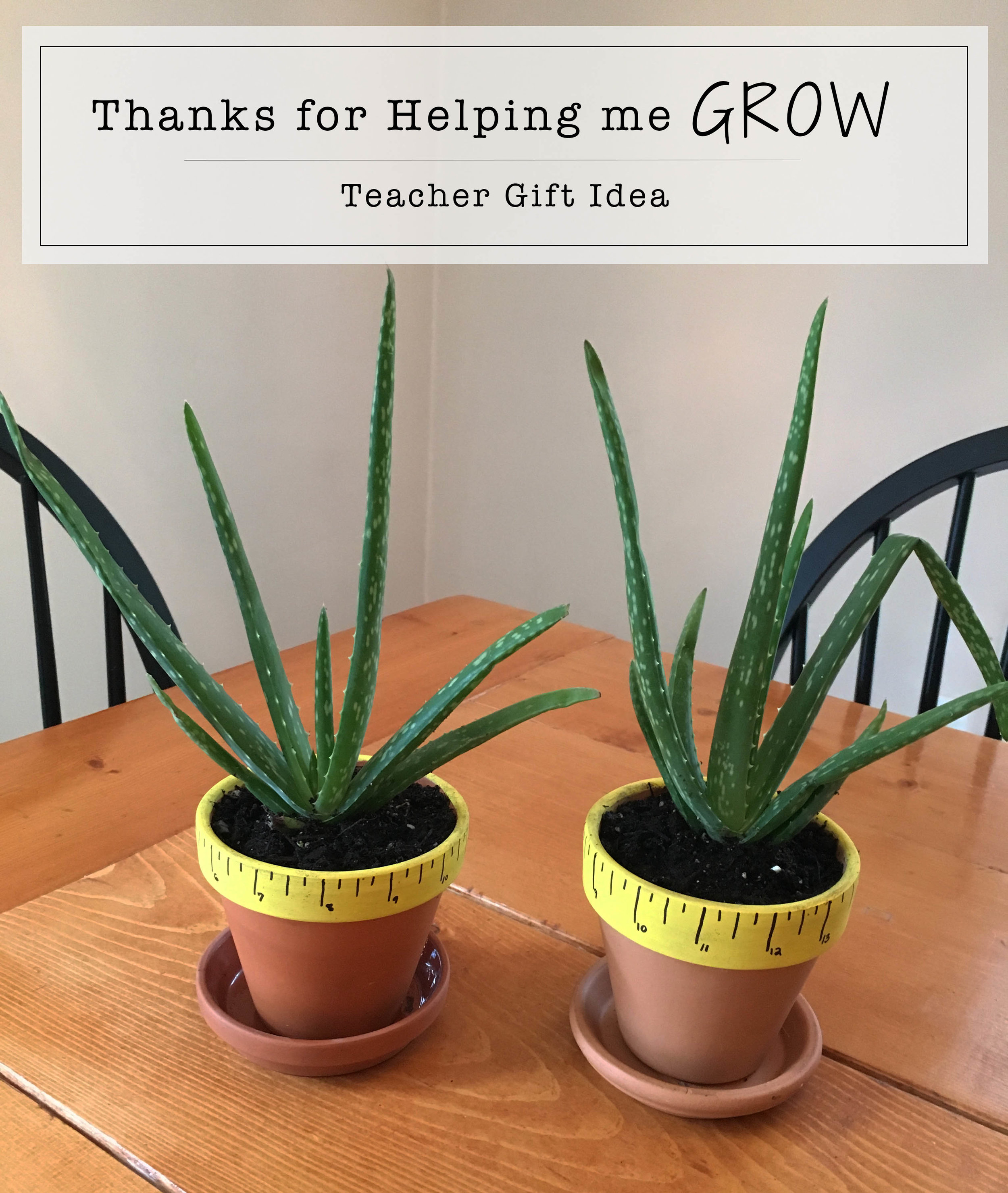 """Thanks for Helping me GROW"" DIY Teacher Gift Idea + Free Printable Tag"