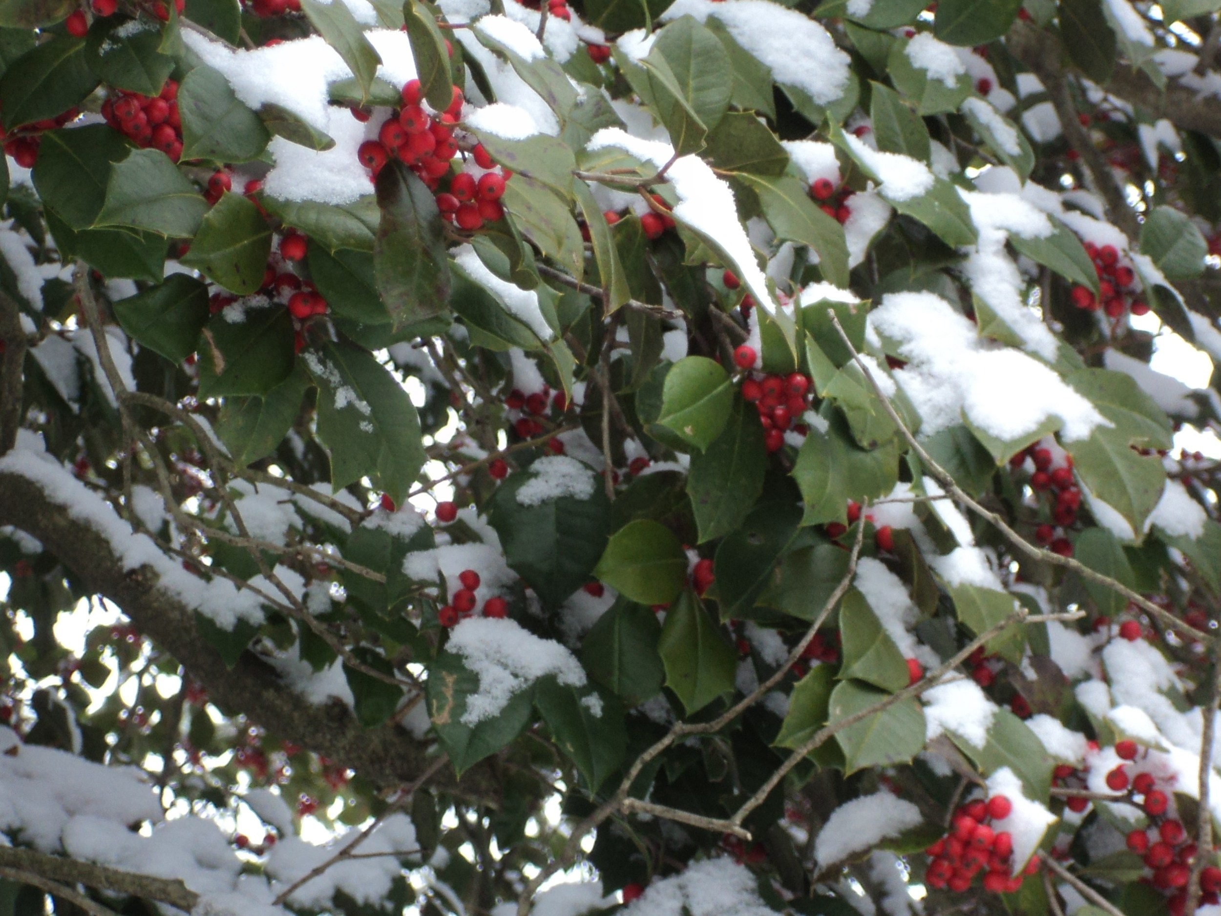 January snowstorm.