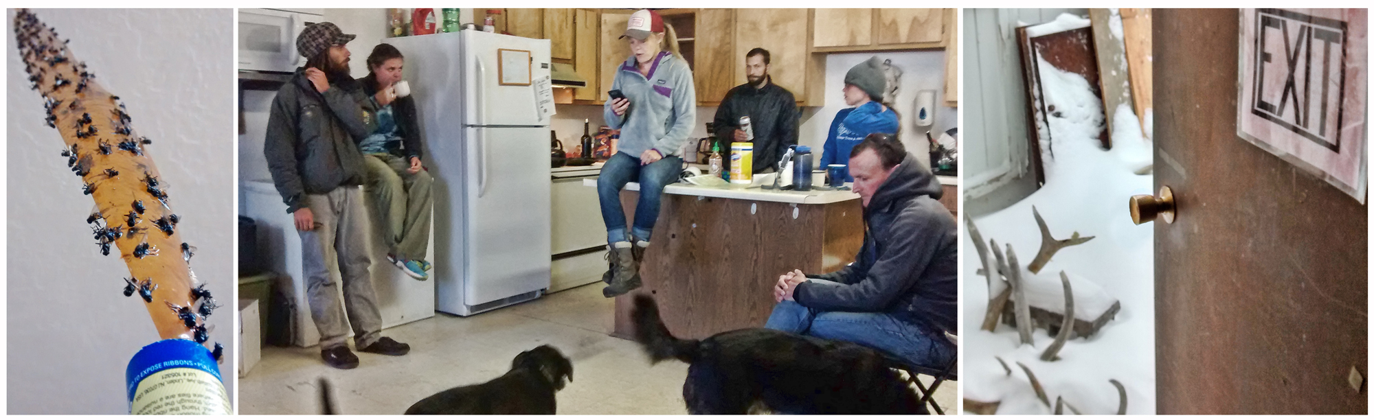 Flies, dogs, and elk shedswere all part of our morning meetings held in the kitchenette/office of Cheetah Shrub HQ.