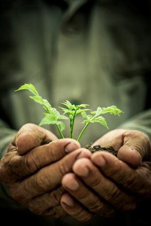 growth hands.jpg