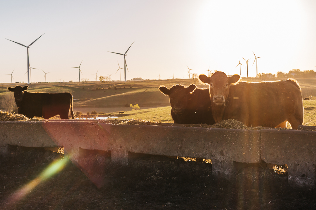 windfarms-4.jpg