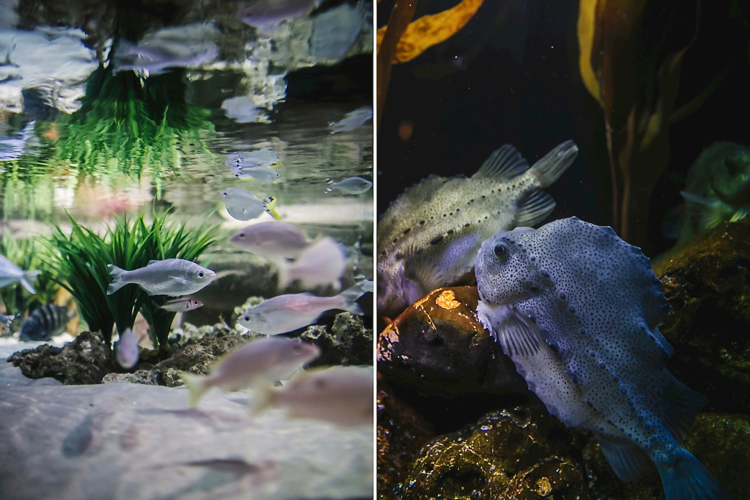 Fish in an aquarium // Part of larger Aquarium engagement photoshoot by Maddie Mae Photography