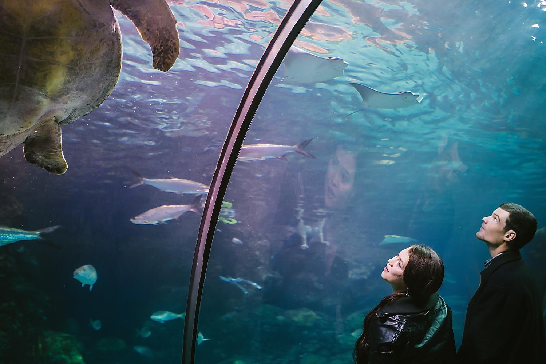 Sea Turtle engagement photos // Downtown Aquarium engagement photos // Underwater, Ocean-themed engagement photoshoot by Maddie Mae Photography // Denver Engagement Photographer