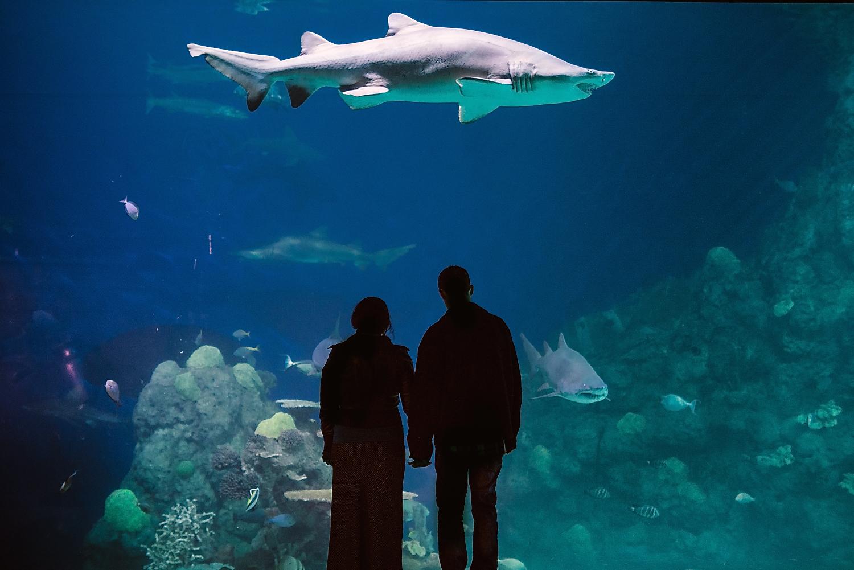 Shark themed engagement photos // Underwater Aquarium engagement photoshoot // Denver Engagement Photographer // Maddie Mae Photography