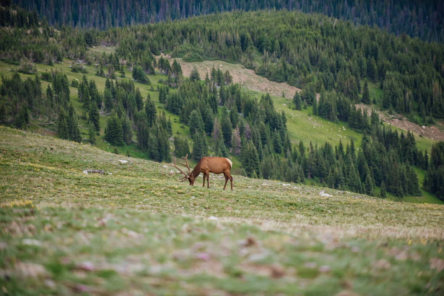 Rocky Mountain National Park is so cool! You never quite know what you will see! Photo by Maddie Mae Photography
