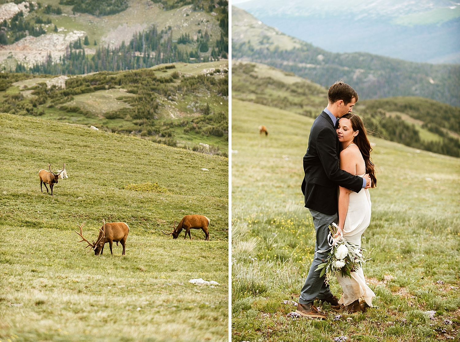RMNP is the best wedding venue in Colorado! The Rocky Mountains have so much to offer on your wedding day! Check out this heard of elk in the background of this couple's wedding photos! | RMNP ceremony location photos by Colorado elopement photographer, Maddie Mae.